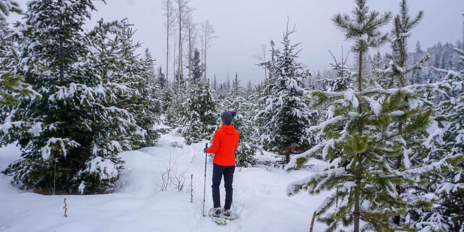 Dogwood Marshes Snowshoe