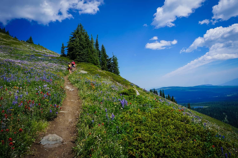 Alpine Blossom Festival